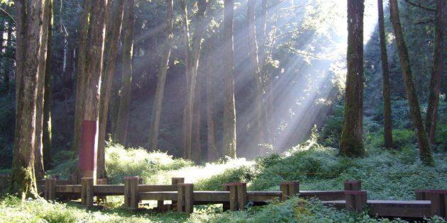 Sun shining through onto green forest.